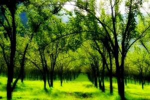 Chitlang Organic Village Resort